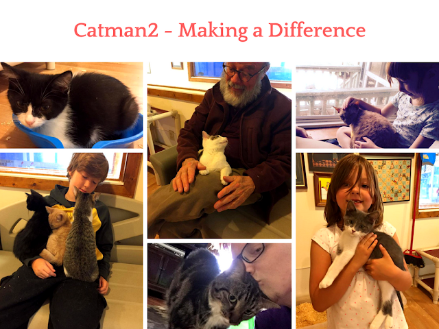 Cat, Catman2, ESA, Emotional Support Animal, Therapy Cat, Panic Attacks, Anxiety Attacks, no-kill shelter, cat shelter