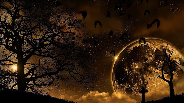 Download Wallpaper 1920x1080 trees, nature, night, planet, birds, landscape Full HD 1080p HD Background
