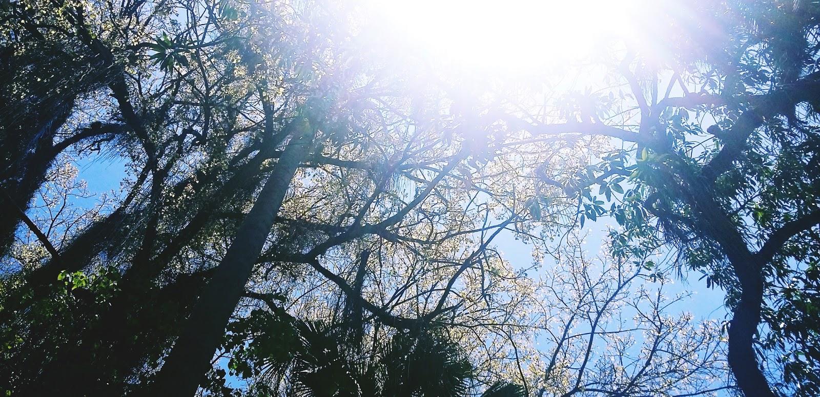 sol entre as árvores