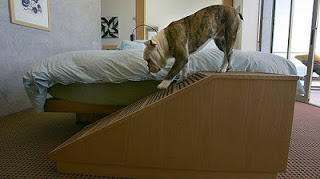 rampas para cães grandes