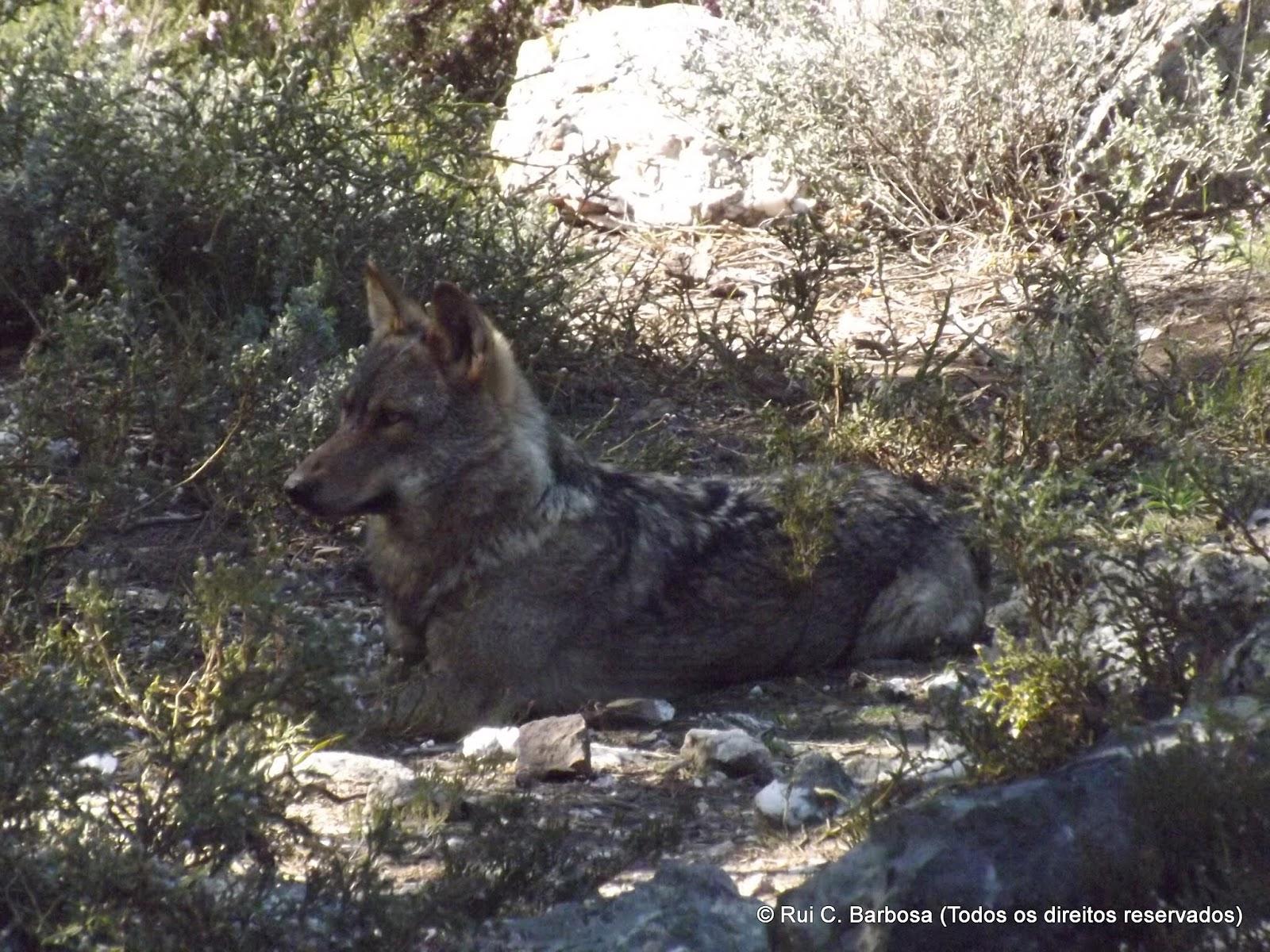 Carris: Visita ao Centro del Lobo Ibérico de Castilla y León