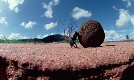 An ntccer stands on his head while rolling under the weight of another kekel pooball!  New Testament Christian Churches of America, Inc. has leaders who treat people like dung beetles!