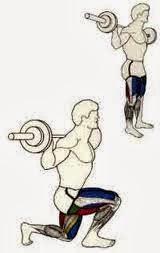 fente musculation