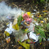 Bau dan Asap Pembakaran Sampah yang Menjengkelkan