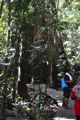 Jalanan kayu di tengah Hutan Mulu