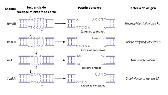 Ezimba de restriccion pdf to word