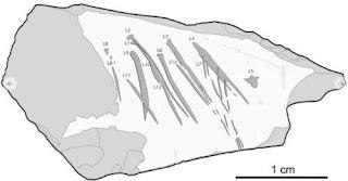 Una pedra gravada en el Paleolític prova la capacitat simbòlica dels neandertals