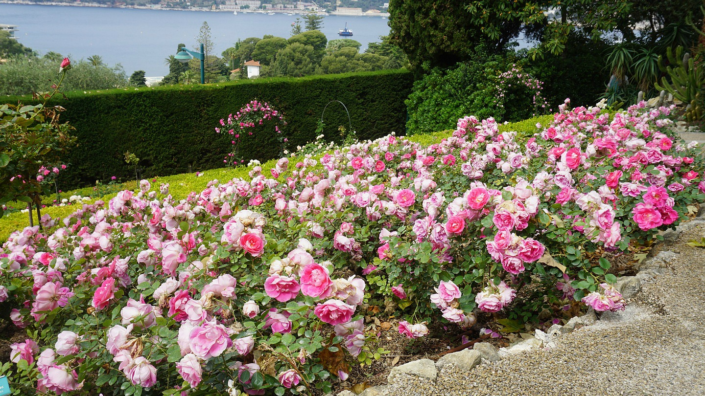 Rose Garden of Villa Ephrussi Rothschild