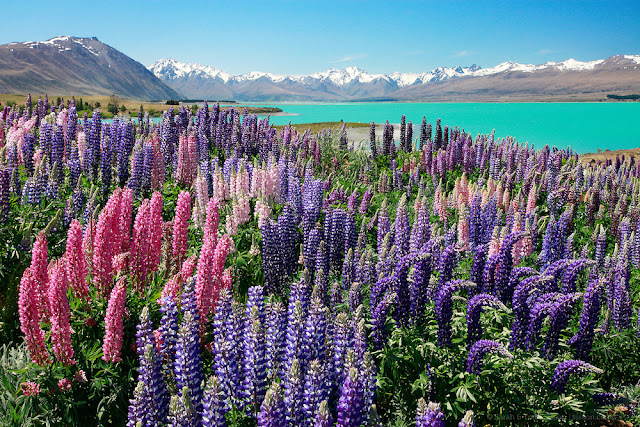 Lake Tekapo New Zealand Most Beautiful Lakes in the World Adventure Travel
