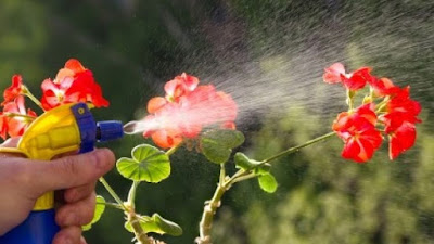 pesticides, making pesticides at home, home made pesticides,