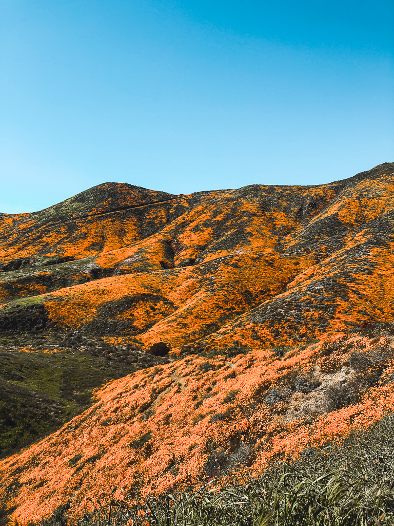 lake elsinore superbloom
