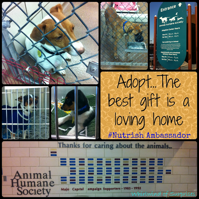 The best gift is a loving home, #Nutrish Ambassador visits and helps more shelters