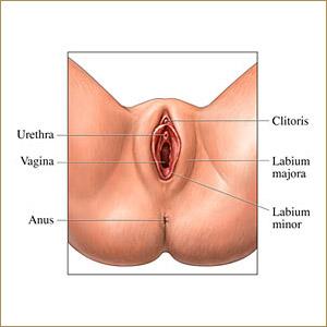 young asian girls vaginas