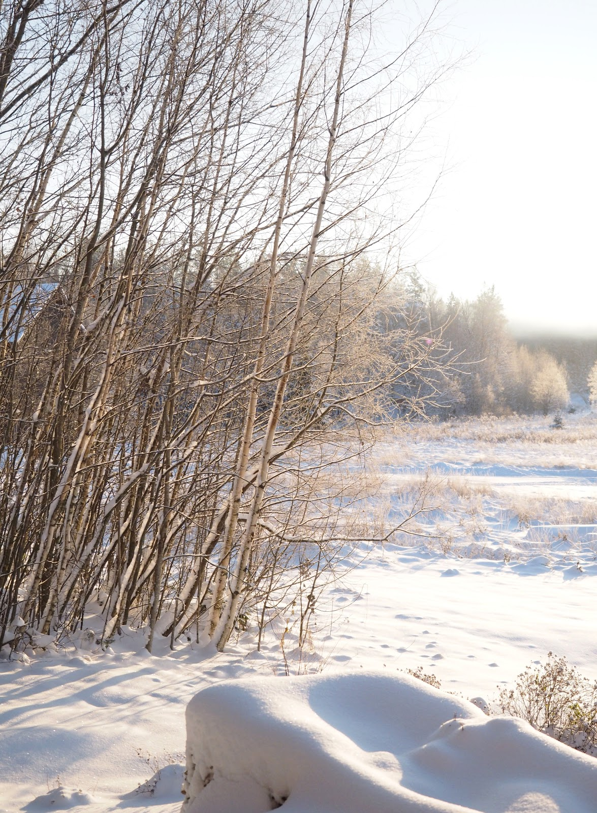 pakkaspäivä, lumi, talvi, kaunis maisema