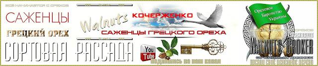Саженцы грецкого ореха Кочерженко, 0957351986, 0985674877, Купить Walnuts Broker