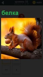 На толстой ветке от дерева сидит белка и во рту держит крупный орех, держась лапами за ствол на