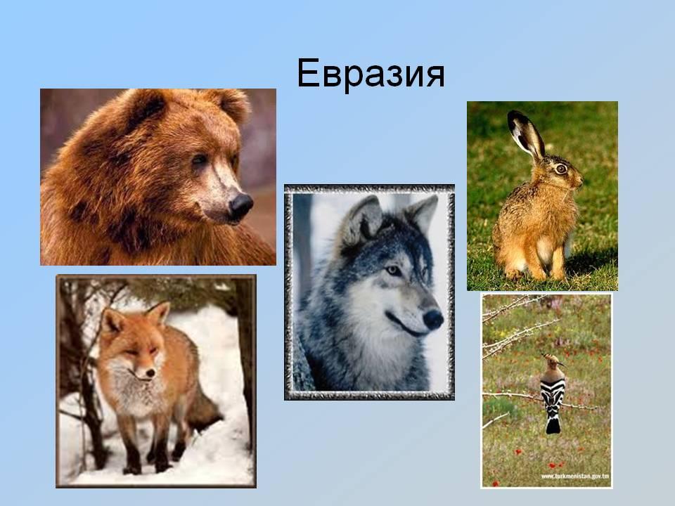 Евразия животные фото с названиями