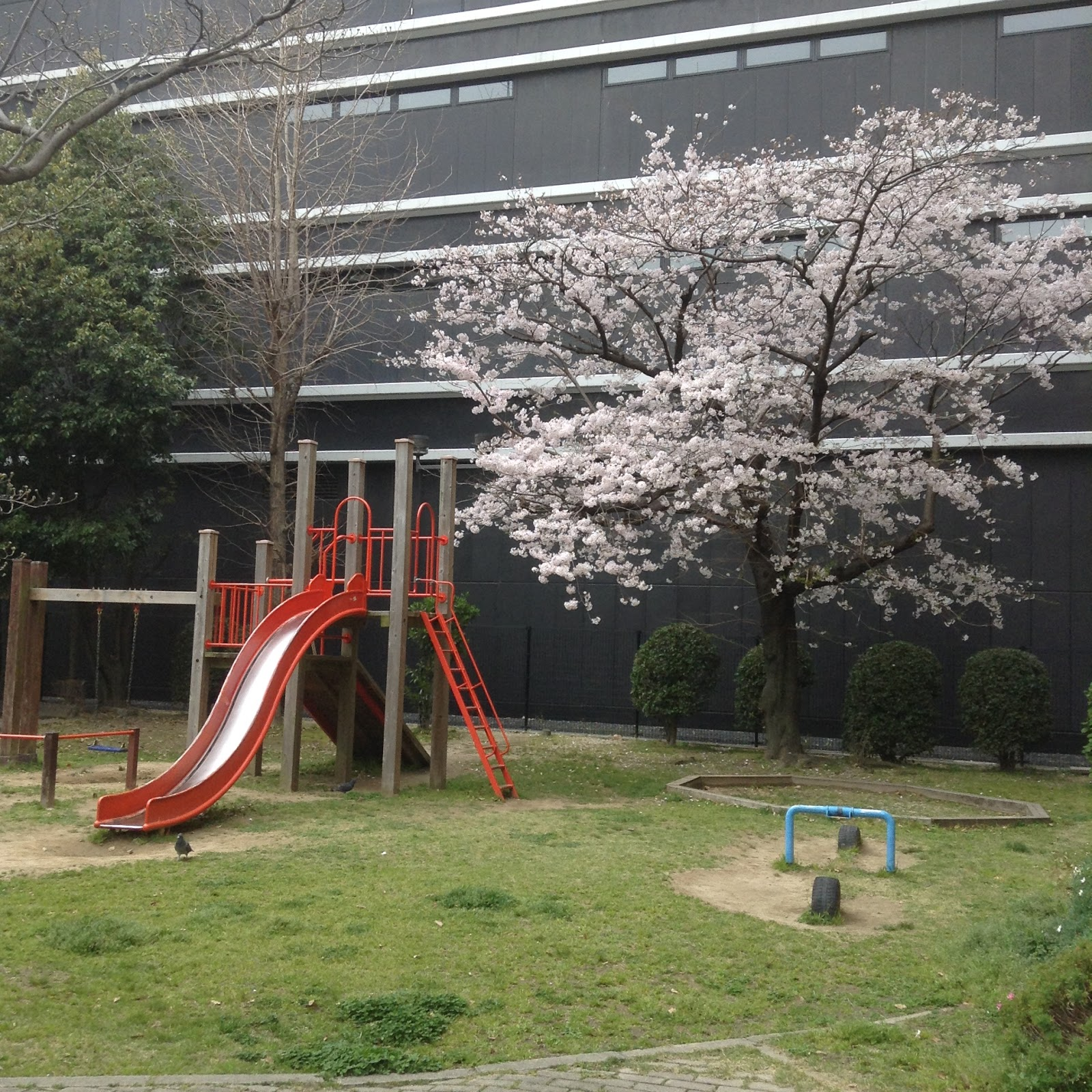 playpark and sakura in Hiroshima