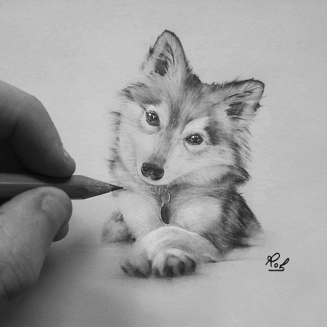 02-Curious-Puppy-Roberto-Matteazzi-Animal-Drawings-in-Black-and-White-Charcoal-Portraits-www-designstack-co