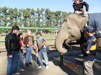conhecendo a América Latina; Buenos Aires; Zôo Lujan; elefante
