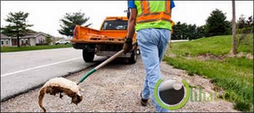 Roadkill Cleaner