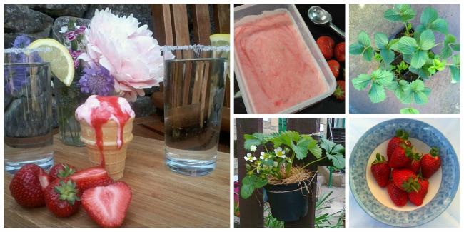 Strawberry & Elderflower 'No Churn' Yoghurt Ice Cream