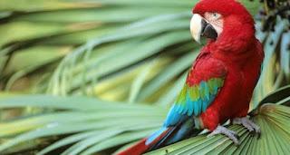 parrot-620x330