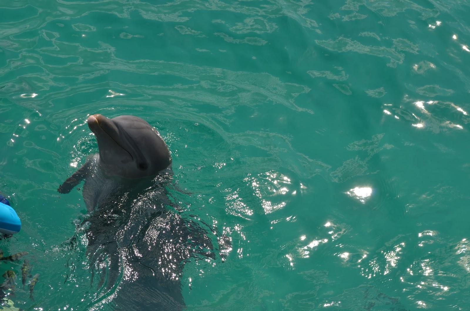 Golfinho Isla Mujeres