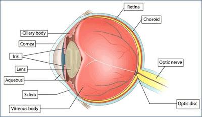 اعرف جسمك .. ما هو الجسم الهدبى بالعين ووظيفته؟