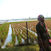 Petani Di Desa Langensari, Blanakan, Subang, Kini Bersiap Untuk Menyambut Musim Tanam