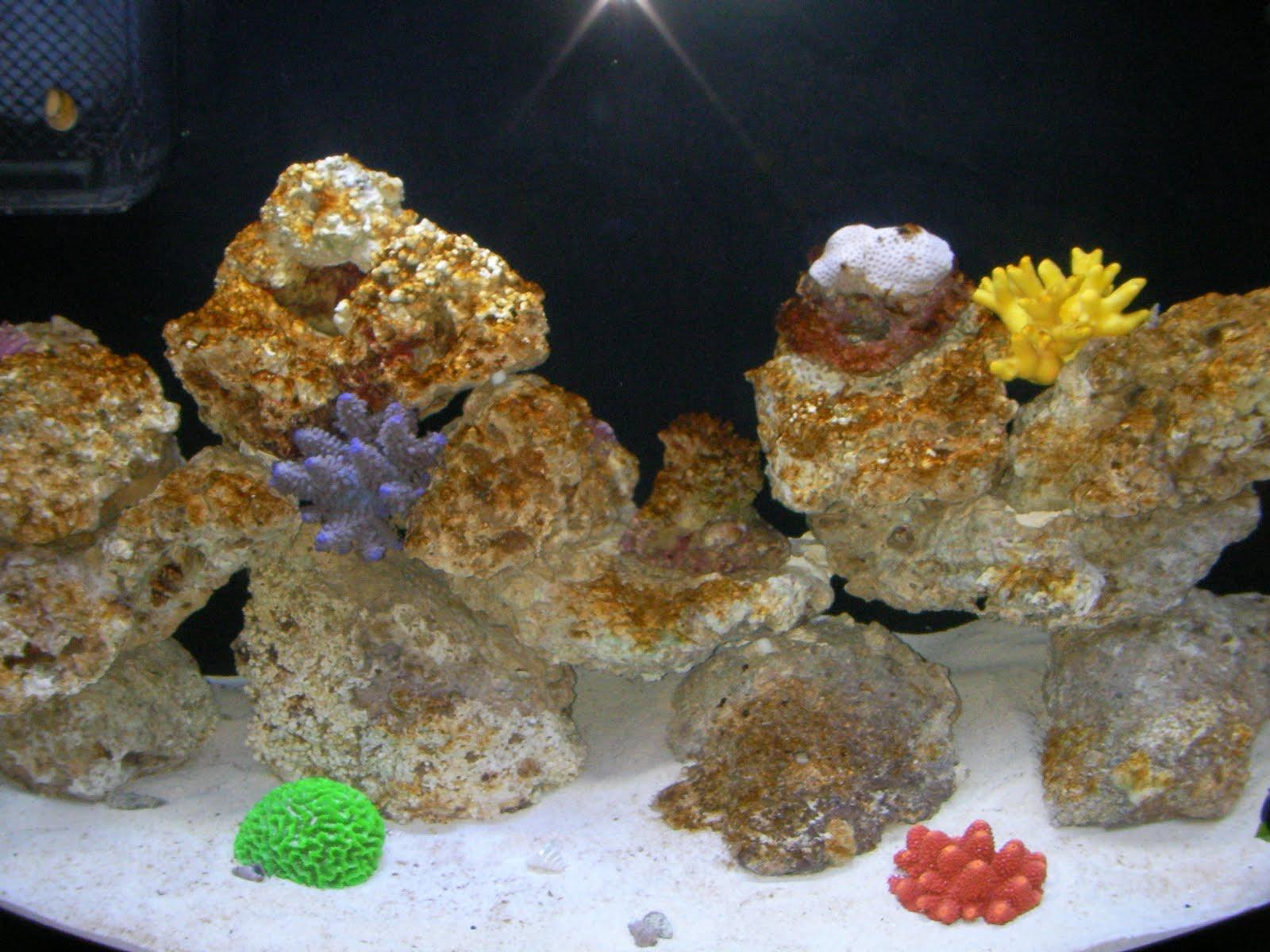 saltwater aquarium diatoms - Saltwater Algae Control: The ...