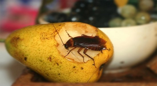 Interesting Facts About Cockroaches, How to Prepare Homemade Cockroach Bait and Defeat Them for GOOD!