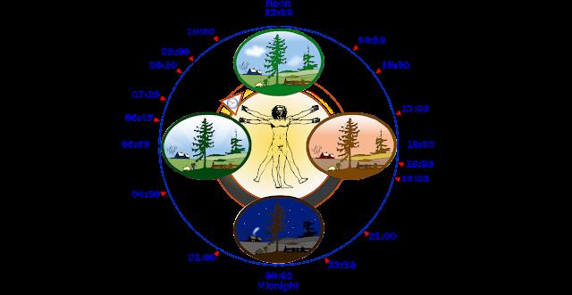 Body's Internal Clock | Circadian Timing