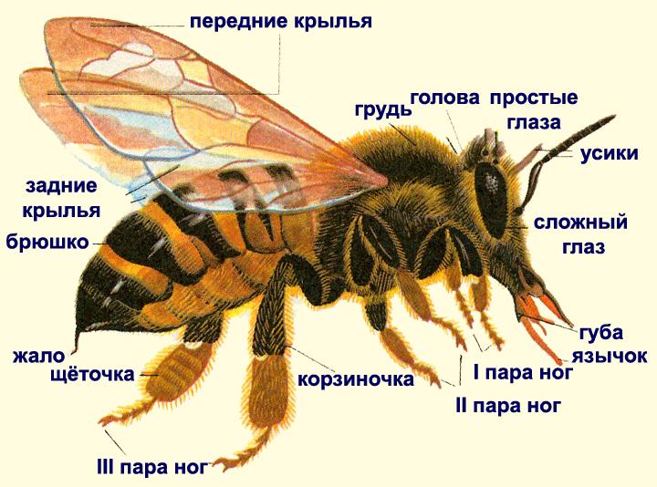 Книгу О Пчеловодстве
