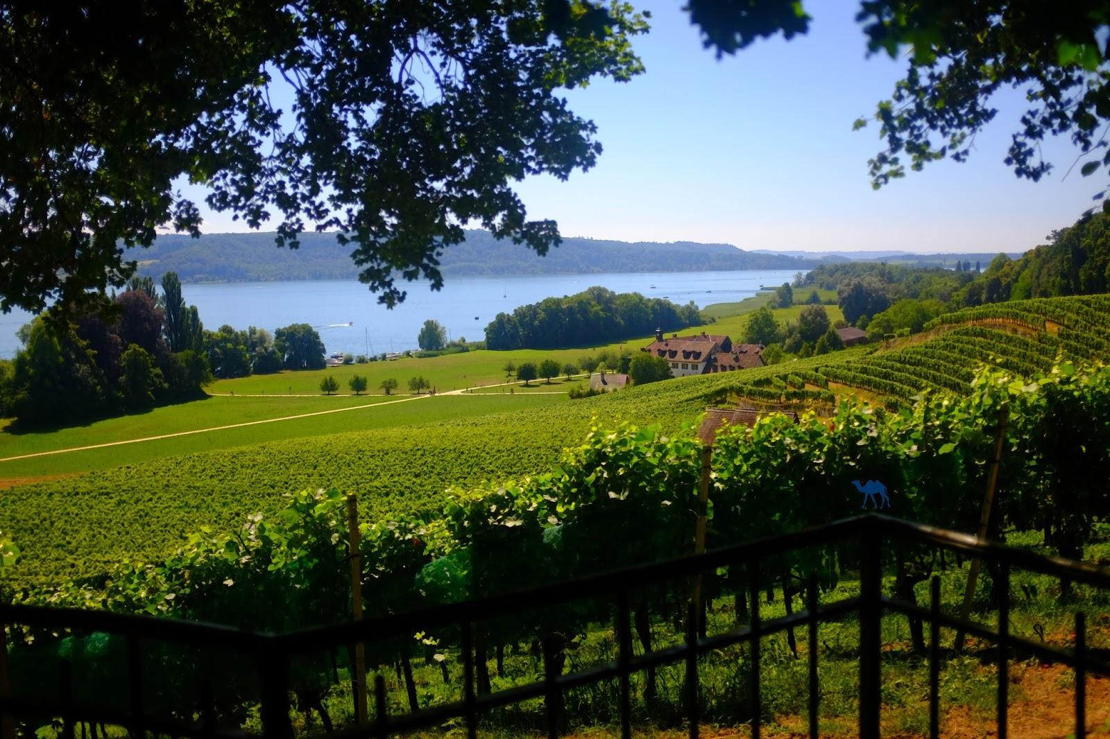 Le Chameau Bleu - Vigne et Lac de Bienne - Suisse