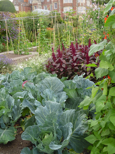 angielski ogród warzywny