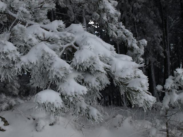 Χιονισμένος Ταΰγετος