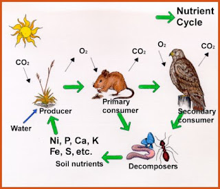 Why farm livestock and not just crops? | Fit2Farm |Wastewater Nutrient Cycle