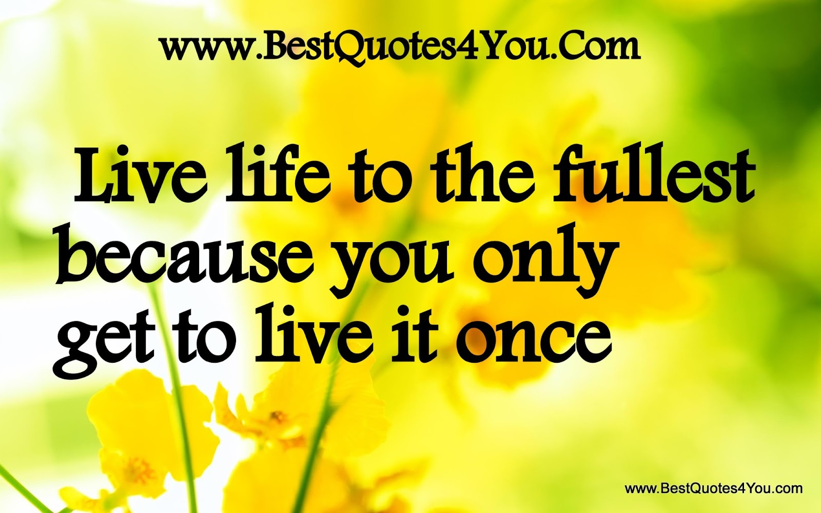 Live Life Quotes Living Life To The Full Quotes Photos
