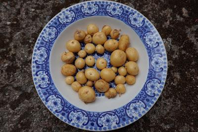 varhaisperunat Arabian Ali-vadilla