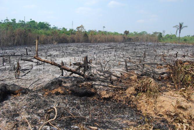 Agricultor morre ao queimar roçado