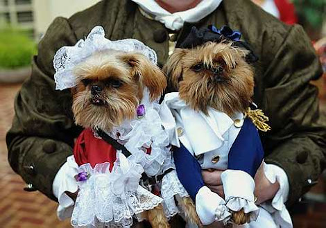 "the ""Doggie Howl-o-ween Costume Contest"""