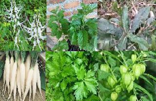 Seperti telah disampaikan pada artikel sebelumnya 13 tumbuhan obat Peluruh batu ginjal