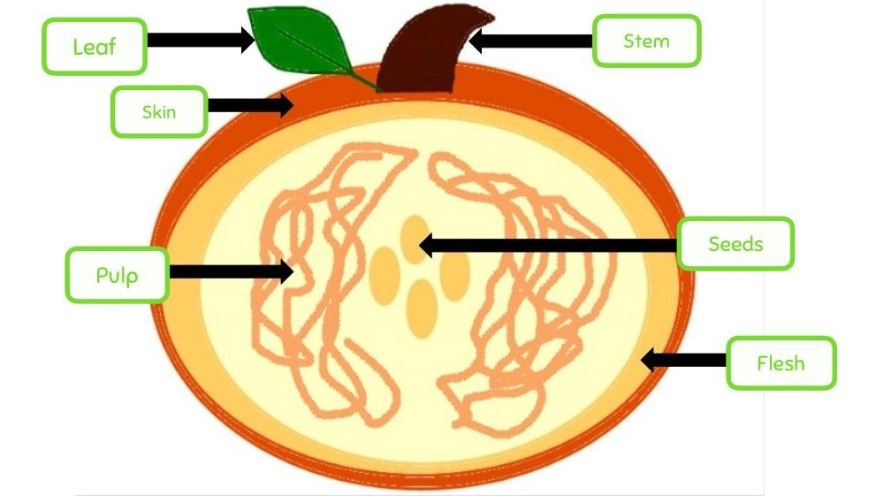 picture of pumpkin with parts labeled in seesaw