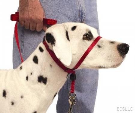 pet shop  Tipos de coleiras para Cães