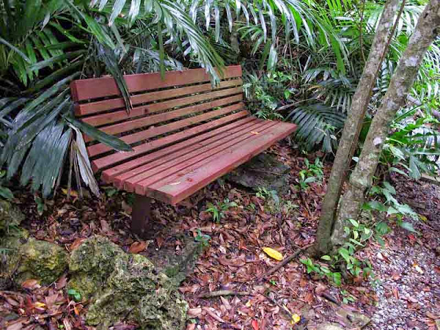 bench, wooded trail