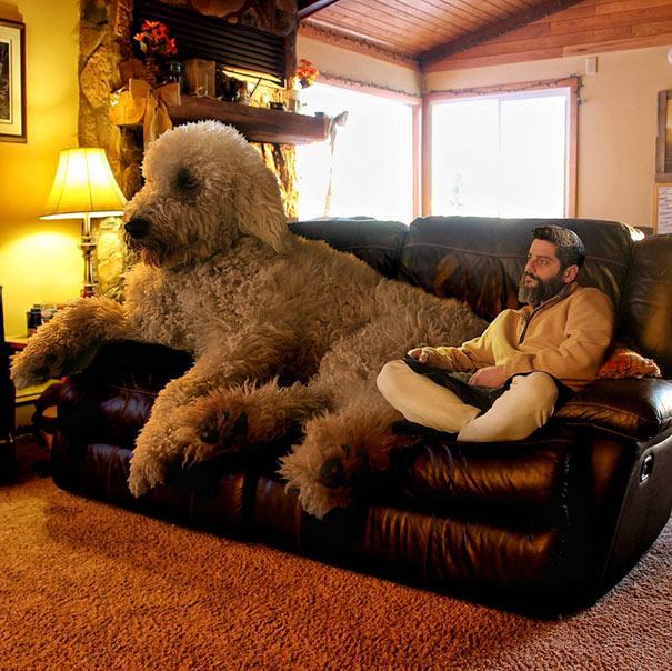 Fotógrafo usa el photoshops para cambiar a su perro en un gigante