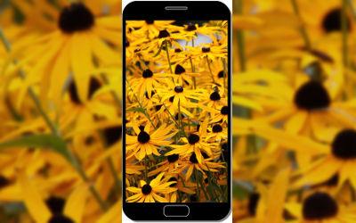 Fleurs Jaunes Macro - Fond d'Écran en QHD pour Mobile