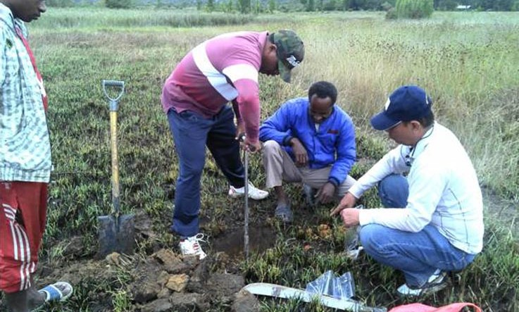 Naikan 50 Persen Produksi Pertanian Jayawijaya Salam Papua