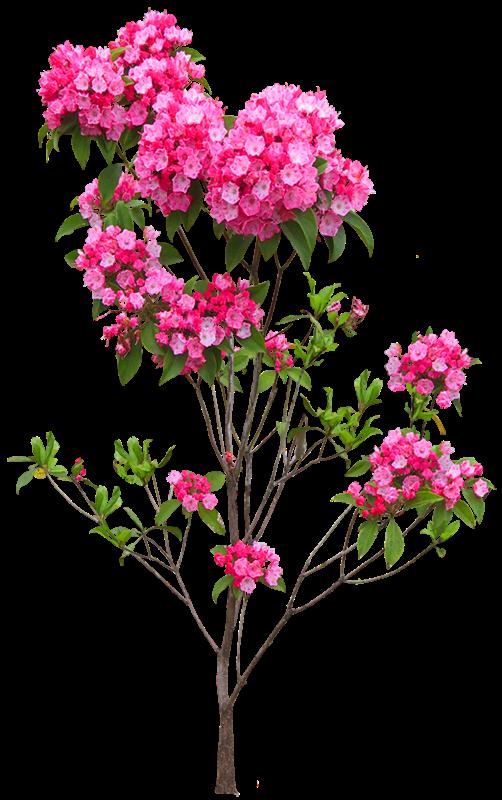 Plantas Balde De Flores Porteira De Fazenda Grama Palmeira